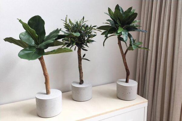 bomenfeitjes vriendschap tussen bomen bomen feitjeskunst boom op stam kunst olijfboompje kunst boompje kunst ficus kunst vijg kunst plantje kunst bomen kunst boompjes groen