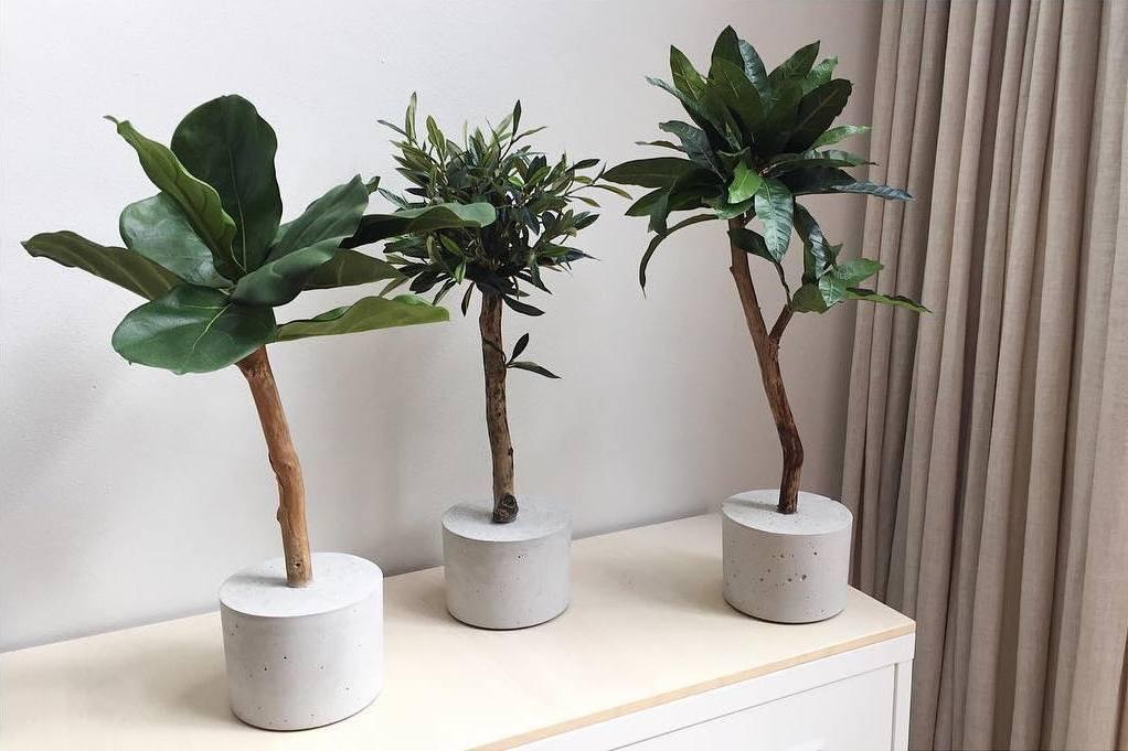 bomenfeitjes vriendschap tussen bomen bomen feitjeskunst boom op stam kunst olijfboompje kunst boompje kunst ficus kunst vijg kunst plantje kunst bomen