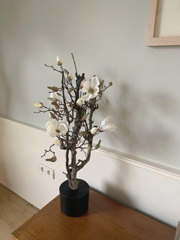 witte magnolia dikke tak magnolia tak magnolia takken kunst