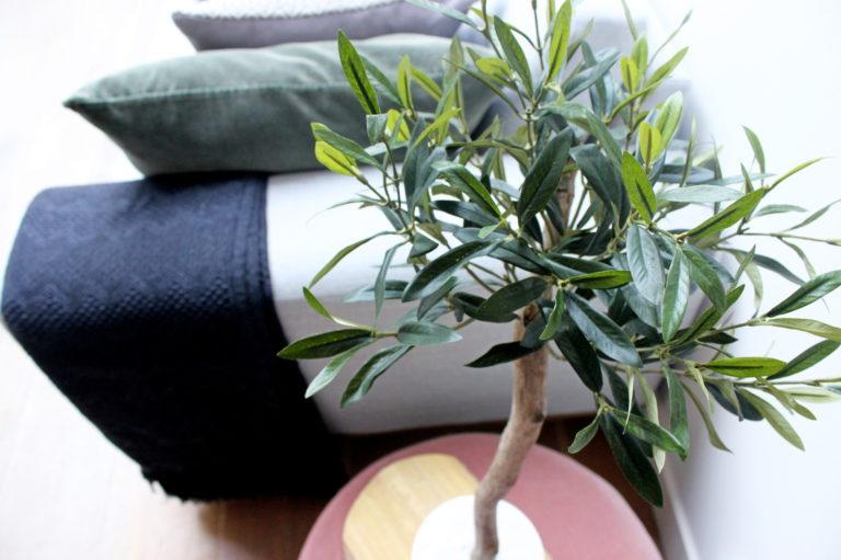 nep olijfboompje