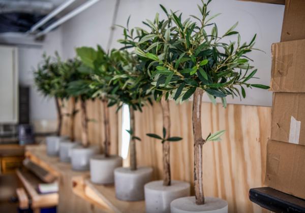 bomen planten duurzaam bedrijf kunstbomen boommade kunst olijfboompjes kunst olijfboompje op stam kunst olijfboom kopen olijfboom binnen