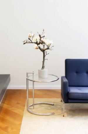 witte magnoliatak