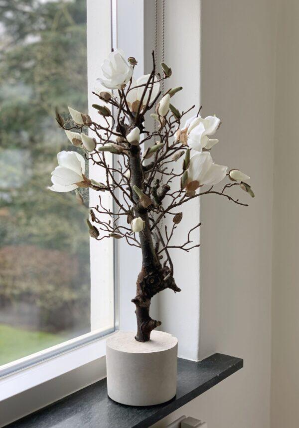 witte magnoliatak magnolia tak magnolia takken wit