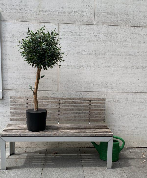 olijfboom in huis kunst olijfboom binnen