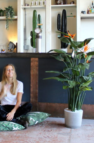 kunst paradijsvogelplant kunst strelitzia neppe strelitziaplant kunstplant mooie kunstplant net echt betonnen voet