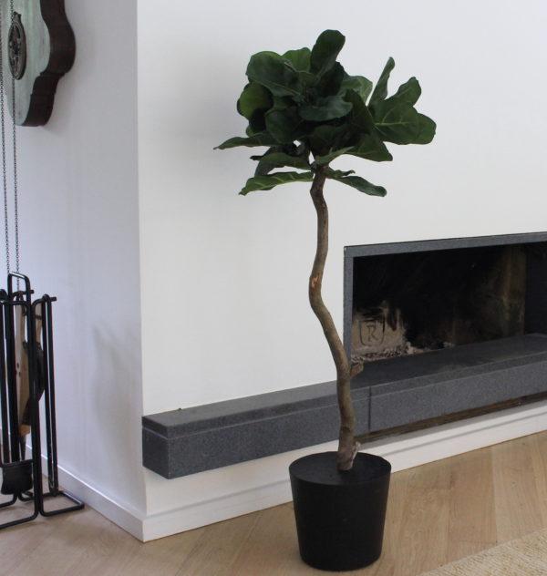 kunst ficus lyrata kunstboom kunstplant betonnen voet boommade