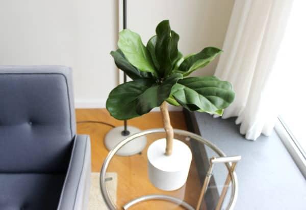 kunst vijgenplant kunst ficus kunst vijgenboompje boommade vijgenboom kunst ficus lyrata duurzame mooie kunstplant
