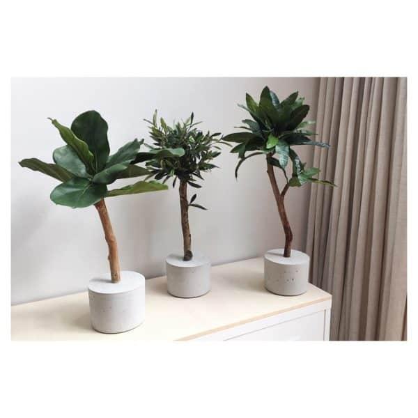 boom op maat kopen mini olijfboom kunst boompje kopen mooie interieurbomen kopenkunstbomen kunstplant kunstplanje duurzame kunstplant mooie kunstboom olijfboompje kunst vijgenboompje ficusboompje kunst mangoboompje