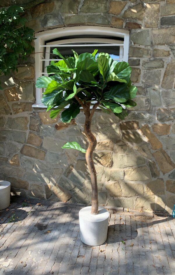 midi vijg plant tabaksplant kunstplant (3)