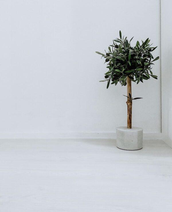 kunst olijfboom binnen