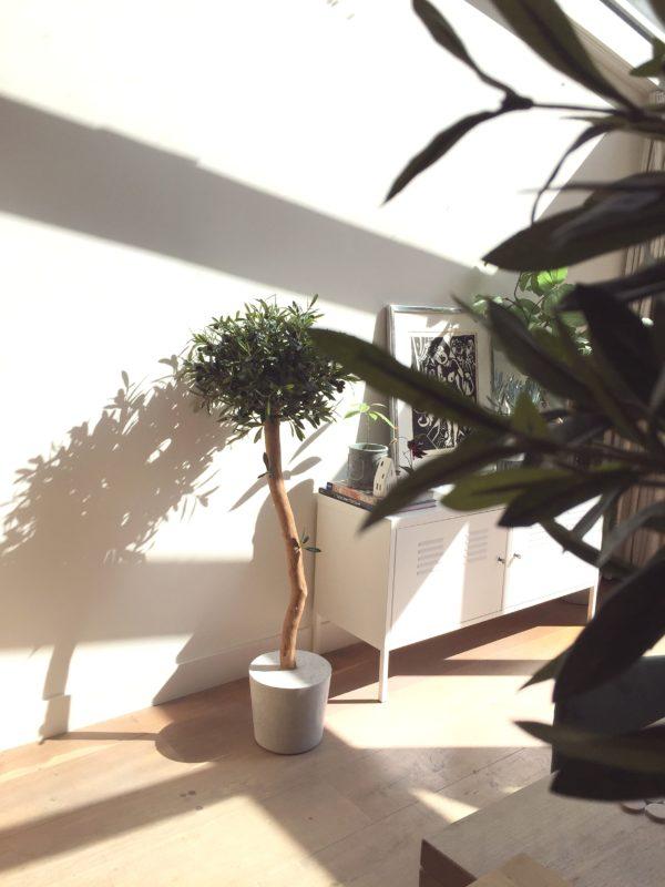 olijfboom binnen handgemaakte boom Boommade kunst olijfboompje olijfboom voor binnen binnenboom interieurboom