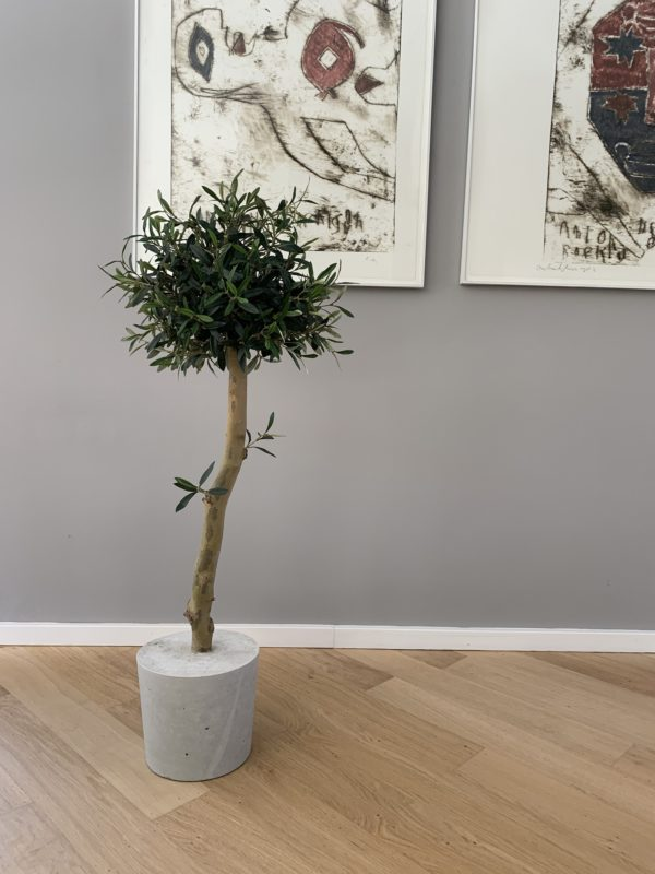kunstboom kunst olijfboom kunst bomen kunstbomen interieurboom boom voor binnen olijfboom in huis olijfboom binnen op kantoor