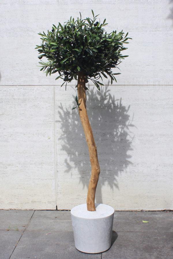 kunst olijfboom handgemaakte boom Boommade kunst olijfboompje olijfboom voor binnen binnenboom interieurboom