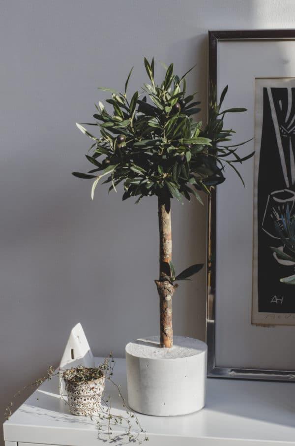 kunst olijfboompje voor binnen kunst olijfboom boom voor in huis kunstboom kantoor