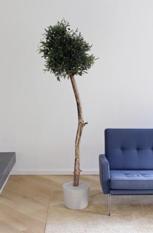 kunstboom olijf kunstboom olijfboom grote kunst olijfboom voor binnen neppe olijfboom kunstboom in huis duurzame kunstbomen kopen kunst olijfboompje boommade