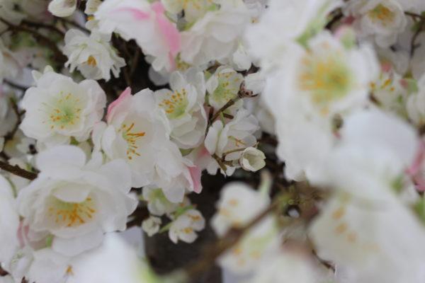 japanse kunst bloesemboom thuis binnen boom grote boom interieurboom kunstboom homemade stijlvolle neppe witte bloesem boom onderhoudsvrij