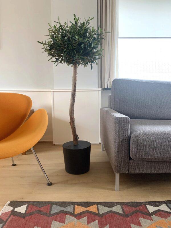 kunst olijfboom binnen bomen in huis binnen bomen