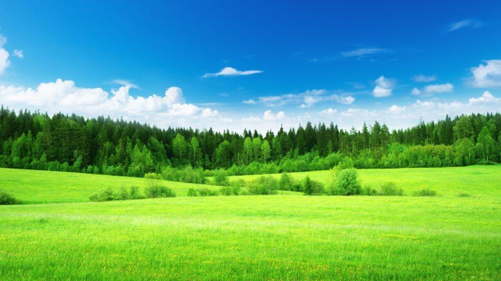 bomenfeitjes bomen feitjes waarom zijn bossen groen