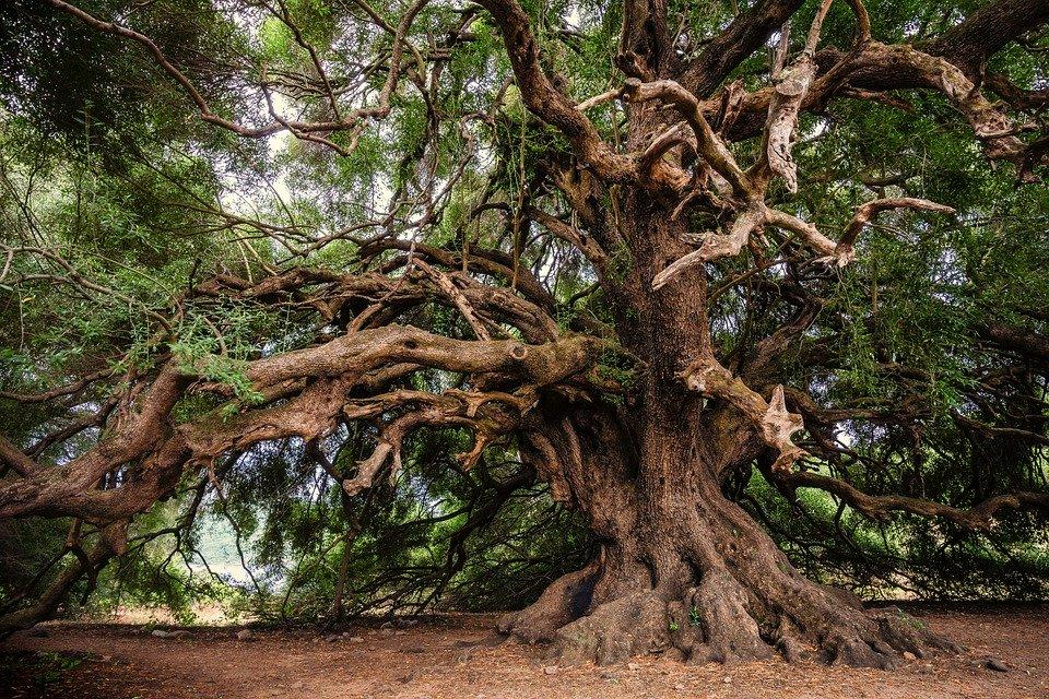 welke boom ben ik levensboom keltische boomhoroscoop boom horoscoop bomen astrologie