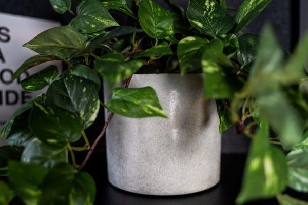 groen plantje kunst met beton