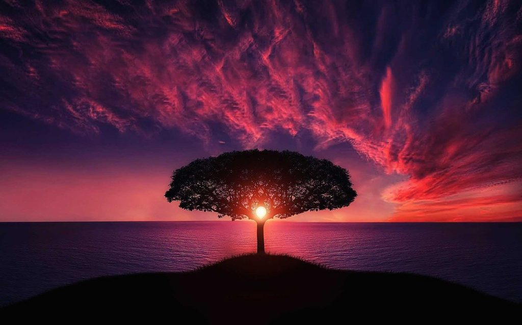 medicinale boom medicinale bomen hoe bomen gebruikt kunnen worden hoe mensen bomen vroeger gebruikten kracht van bomen boom als medicijn boom tegen kwaaltjes