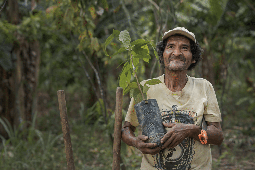 duurzame kunstboom kunstboom kopen kunstboom in huis groene kunstboom bomen planten duurzaam ondernemen boommade