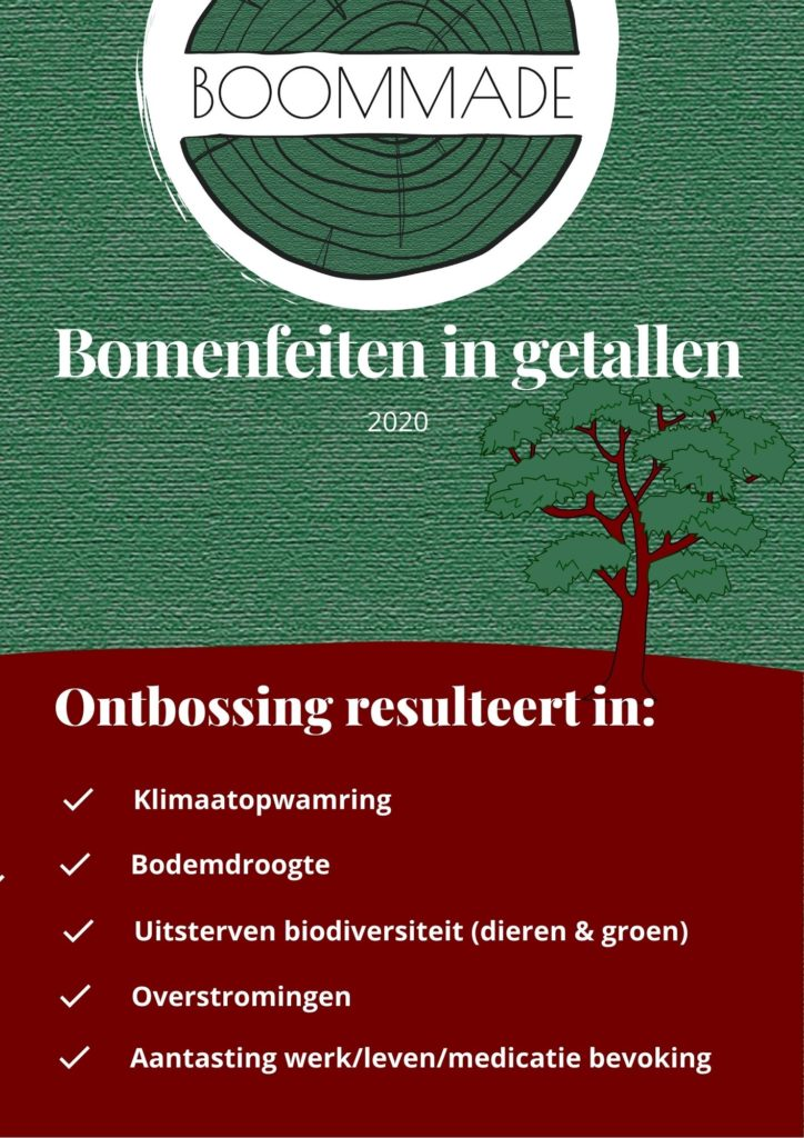 bomen feiten feiten over ontbossing wereldwijd bomen kappen gevolg