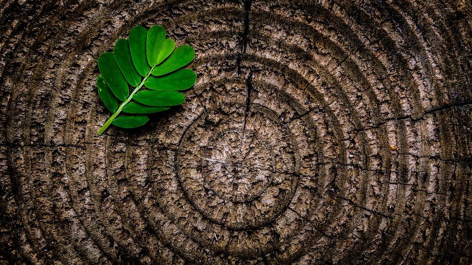 kunnen bomen denken bomenfeitjes duurzame blog weetjes over bomen natuurfeitjes boommade kunstbomen kunst olijfboom interieur duurzaam