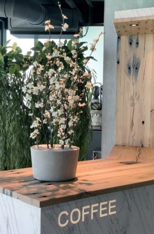 witte bloesemtak zijden bloesem zijden bloemen bloemwerk