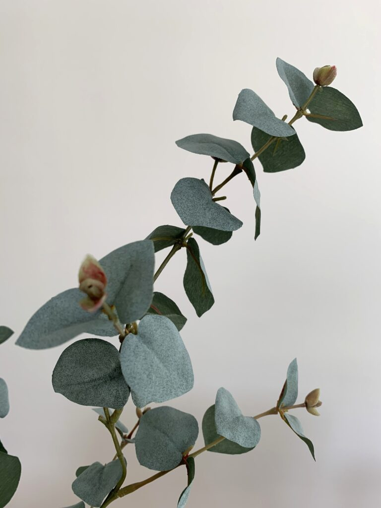 eucalyptus tak kunst eucalyptus takjes