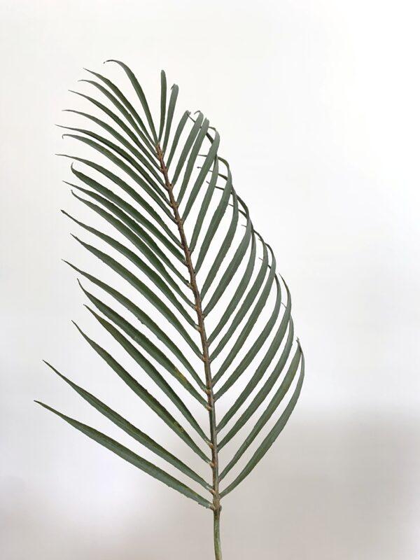 kunst palmblad groen kunst blad