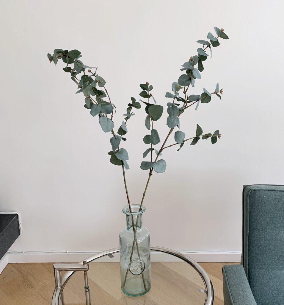 eucalyptus siertakjes