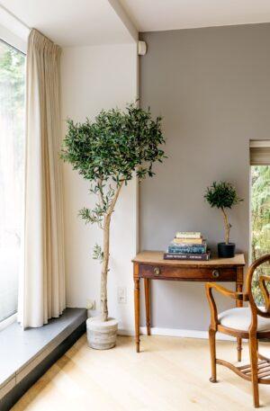grote kunst olijfboom binnen boom in huis kantoorboom