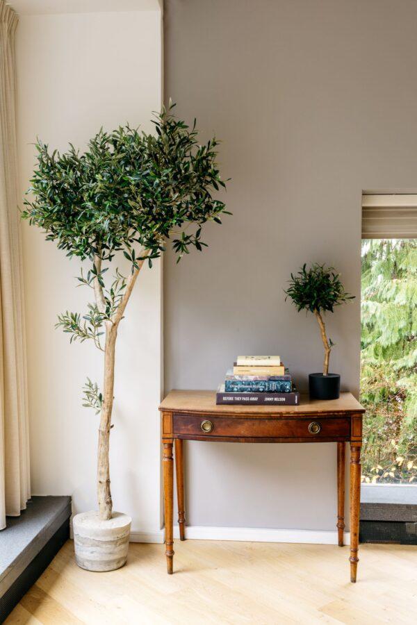 kunst olijfboom kunst olijfboompje binnen interieurboom olijf