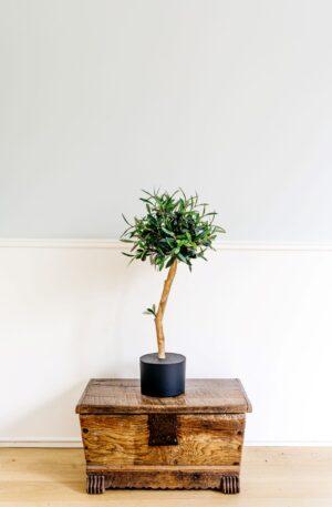 kunst boompje olijfboompje Kunst olijfboom op stam