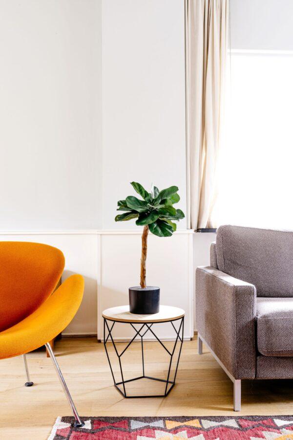 boom in huis kunstboom kopen kunstbomen binnen bomen binnen binnenboom