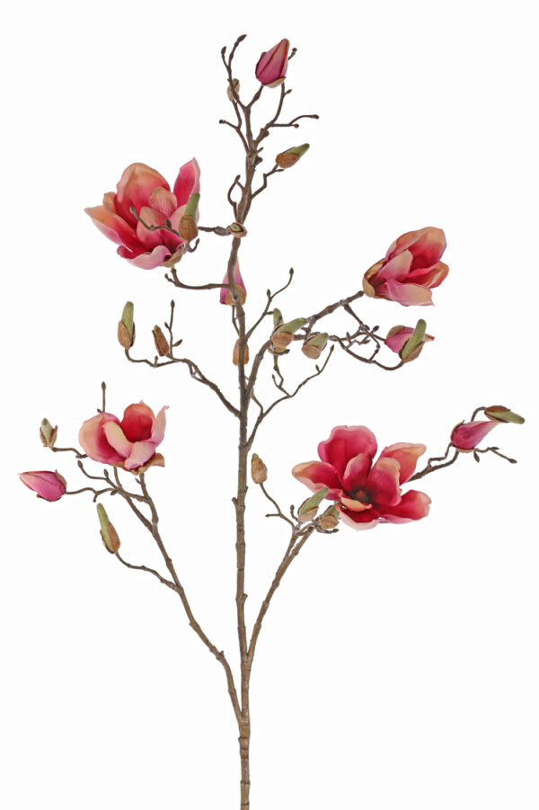 roze magnoliatak siertak magnolia takken magnolia tak kunst
