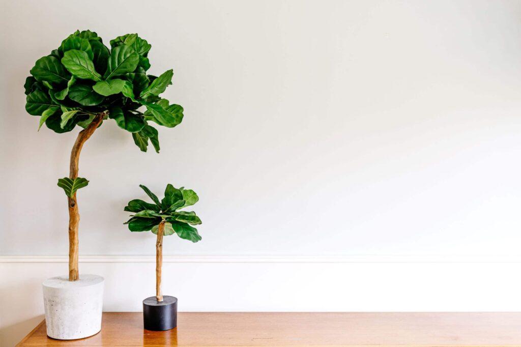 kunstbomen Boommade kunst bomen voor binnen binnen boom kopen interieurboom kopen