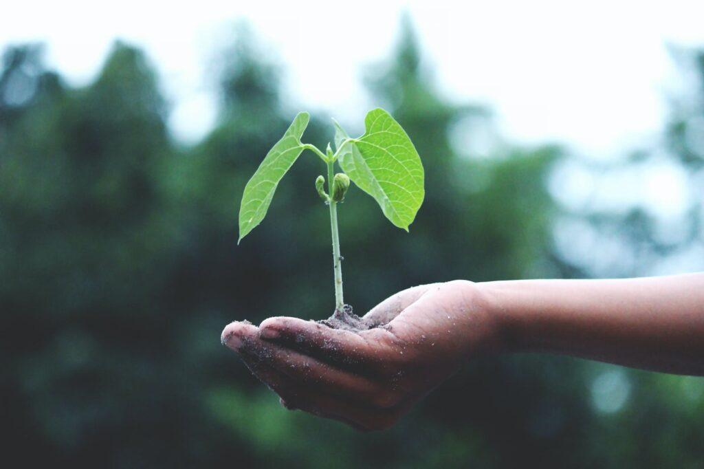 Wat is een ecosysteem