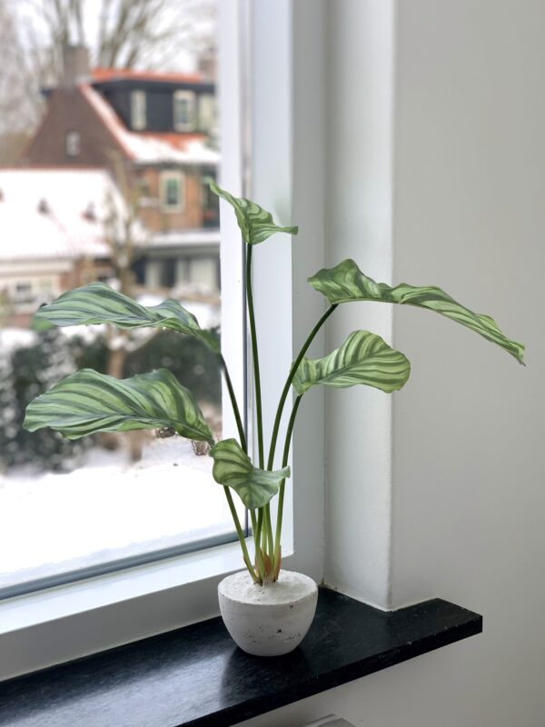 kunst plant calathea plant kunstplant