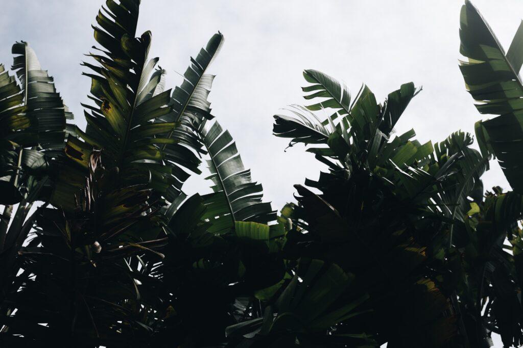 positieve klimaatverhalen boom binnen boom in huis kunstbomen binnen grote kunst planten bananenplant interieur boom