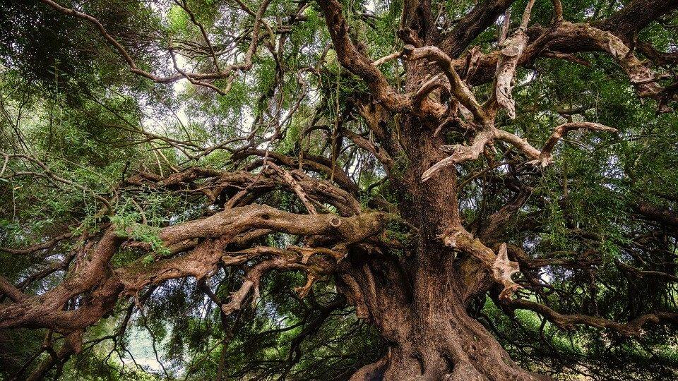 bomen planten natuur maakt gelukkig onderzoek nederlanders documentaires over bomen en klimaat documentaires over klimaat en bomen duurzaamheidbomen planten meer bomen dankzij meer bedrijven co2 compenseren kunst bomen kopenfeiten over ontbossing bomen feiten welke boom ben ik levensboom keltische boomhoroscoop boom horoscoop bomen astrologie