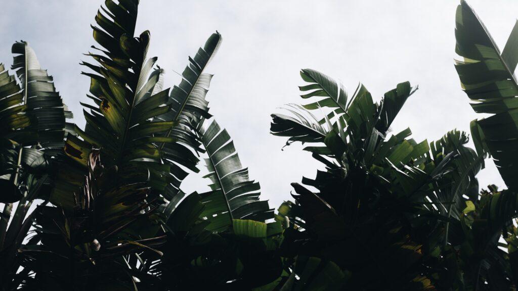 bomen planten boom binnen boom in huis kunstbomen binnen grote kunst planten bananenplant interieur boom