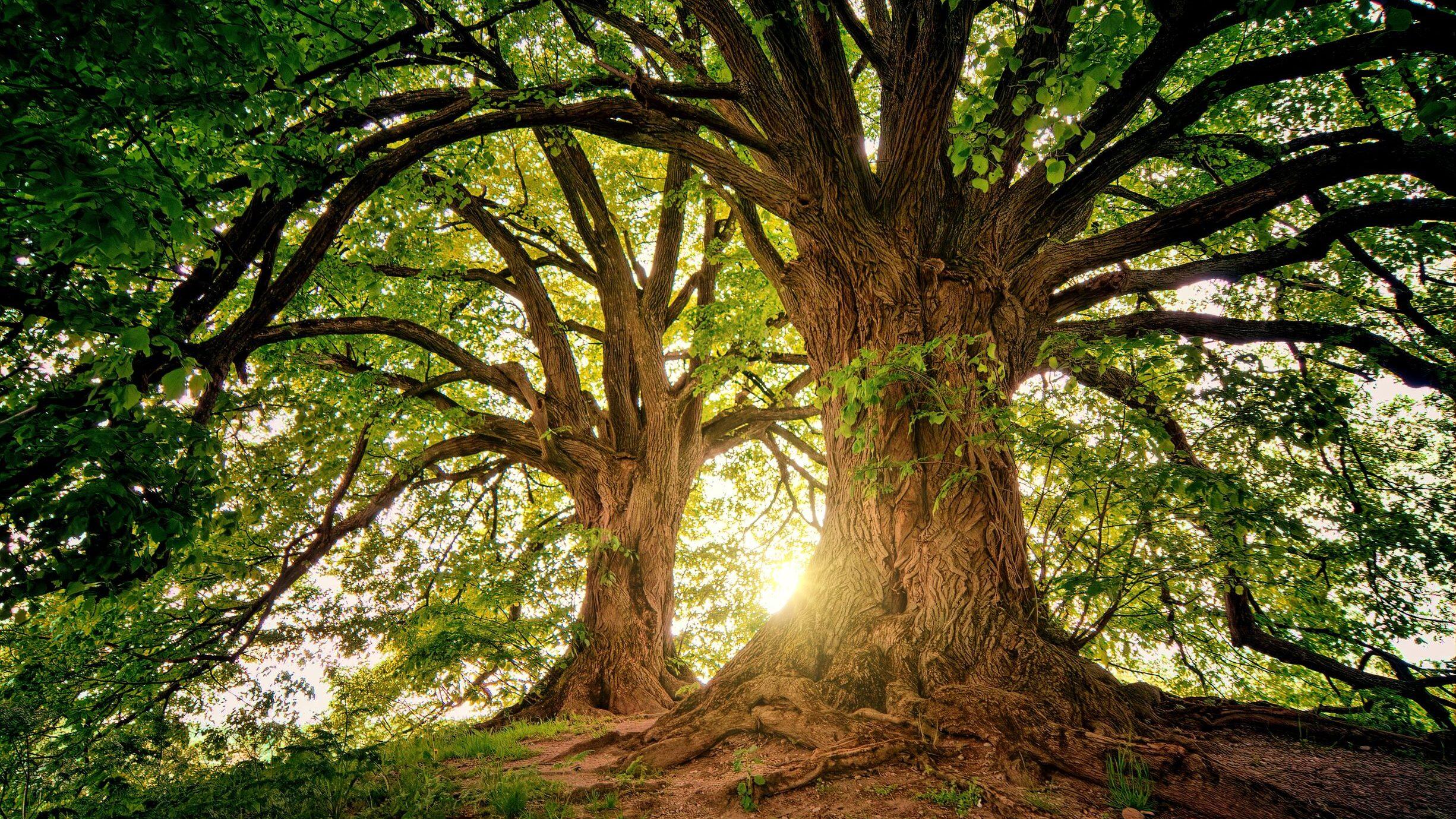 duurzame kunstboom boommade boom in huis binnen boom bomen planten