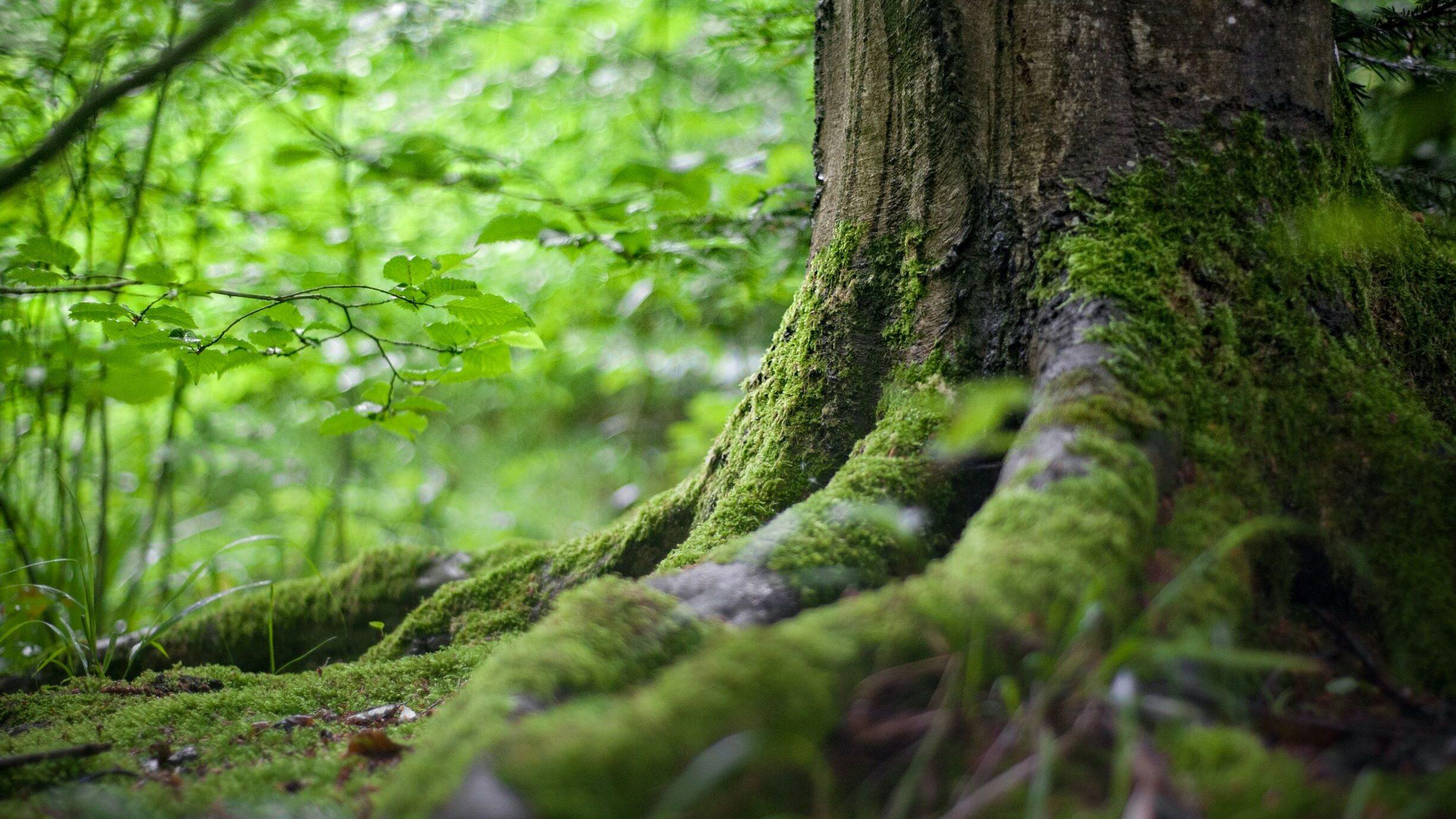 positieve klimaatverhalen positief klimaat nieuws klimaatnieuws leuk bomen planten