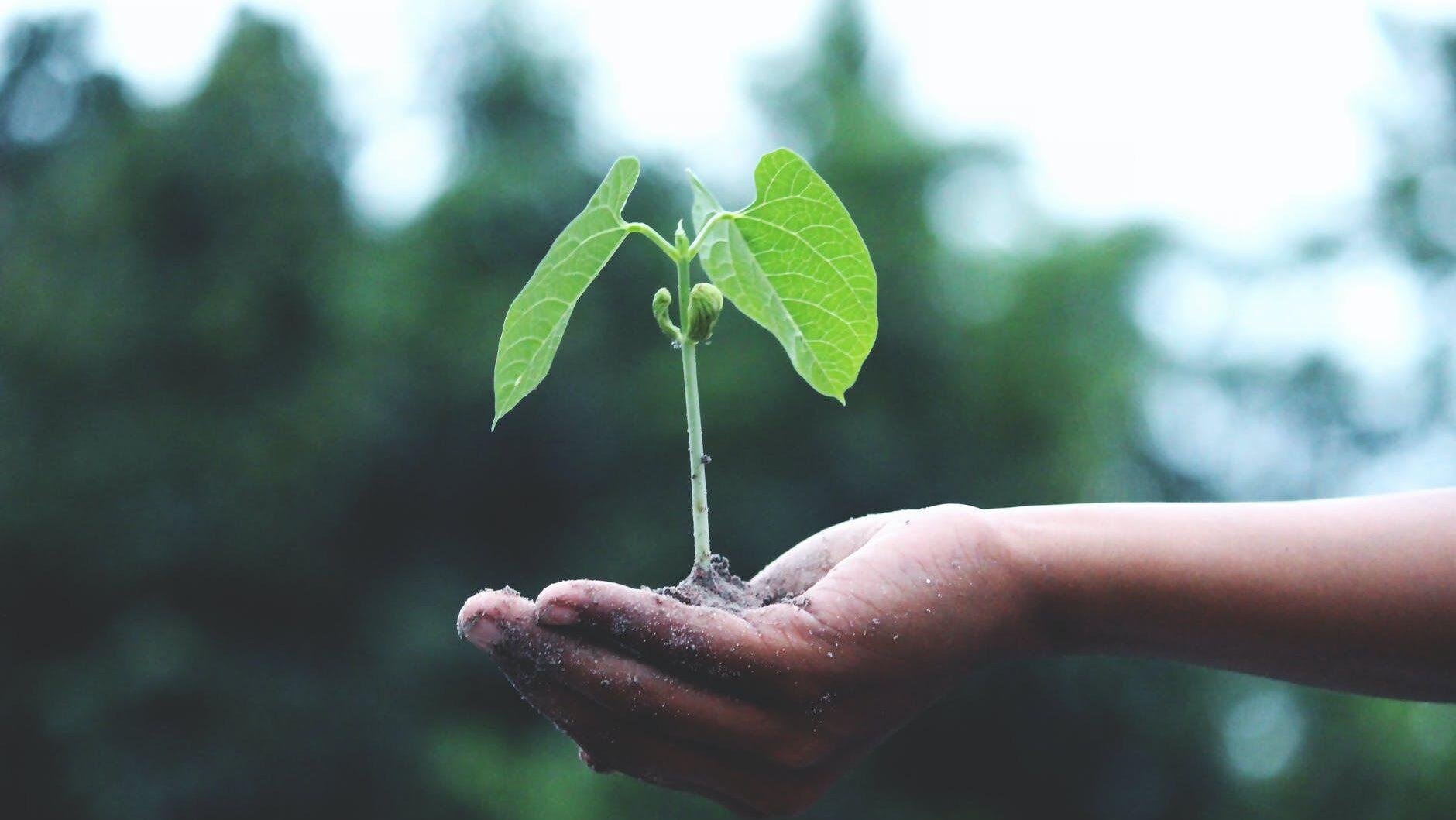 positieve klimaatverhalen waarom bomen planten Wat is een ecosysteem documentaires over het klimaat documentaires over bomen